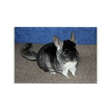 Chinchilla Rectangle Magnet