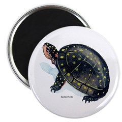 Spotted Turtle 2.25