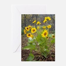 Balsam Root Greeting Cards (Pk of 10)