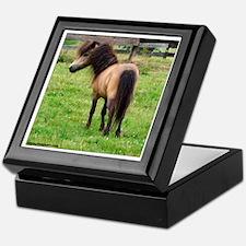 Miniature Horse Buckin Velvet Keepsake Box