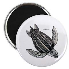 Leatherback Turtle Magnet