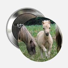 Jill's Favorite Mini Colt Button