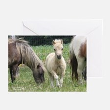 Jill's Favorite Mini Colt Greeting Cards (Package