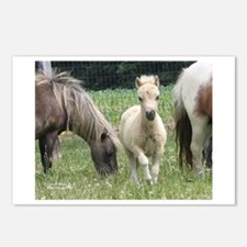 Jill's Favorite Mini Colt Postcards (Package of 8)