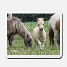 Jill's Favorite Mini Colt Mousepad