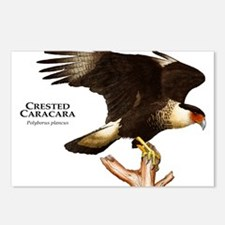 Crested Caracara Postcards (Package of 8)