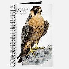 Peregrine Falcon Journal