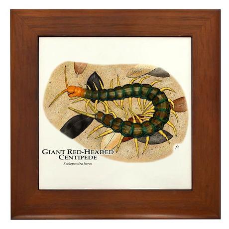 Giant Red-Headed Centipede Framed Tile