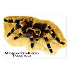 Mexican Red-Kneed Tarantula Postcards (Package of