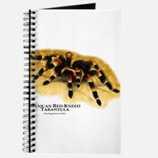 Mexican Red-Kneed Tarantula Journal