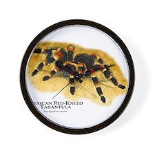 Mexican Red-Kneed Tarantula Wall Clock