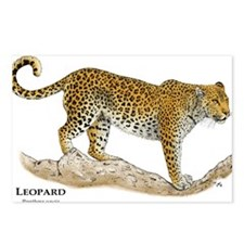 African Leopard Postcards (Package of 8)