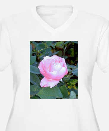 Late Summer Bloom T-Shirt