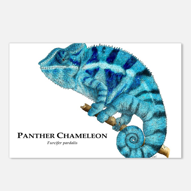 Panther Chameleon Postcards (Package of 8)