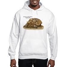 African Spurred Tortoise Hoodie