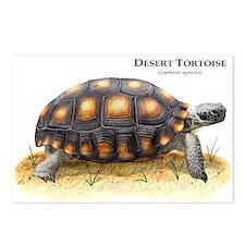 Desert Tortoise Postcards (Package of 8)