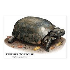 Gopher Tortoise Postcards (Package of 8)