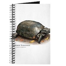 Gopher Tortoise Journal