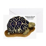 Indian star tortoise Greeting Cards (10 Pack)