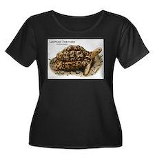 Leopard Tortoise T