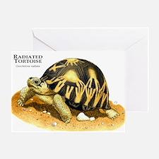 Radiated Tortoise Greeting Card