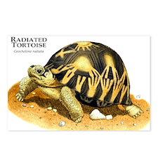 Radiated Tortoise Postcards (Package of 8)