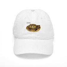 Eastern Box Turtle Baseball Cap