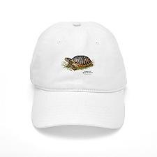 Ornate Box Turtle Baseball Cap
