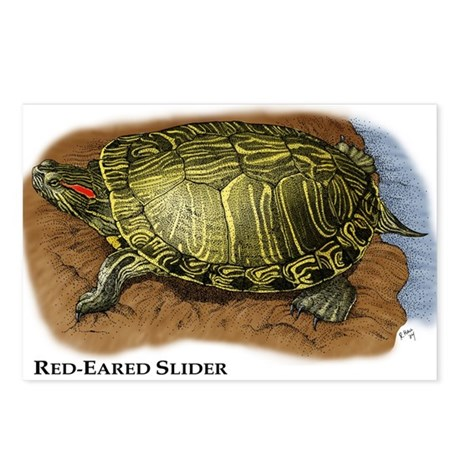 Red-Eared Slider Postcards (Package of 8)