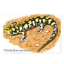 Tiger Salamander Postcards (Package of 8)