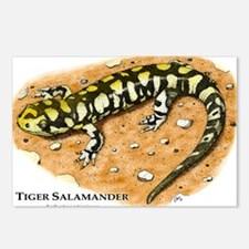 Tiger Salamander Postcards (Package of 8)