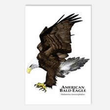 American Bald Eagle Postcards (Package of 8)