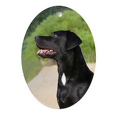 Labrador Retriever Oval Ornament