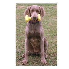 Longhaired Weimaraner Postcards (Package of 8)