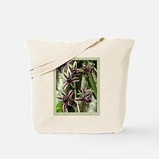 max. findlaysonnianum orchid Tote Bag