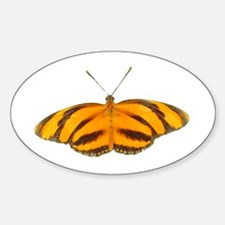 Orange Butterfly Oval Decal