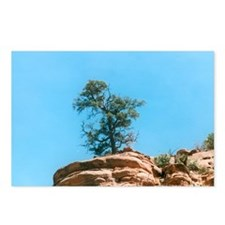 Funny Wisdom tree Postcards (Package of 8)