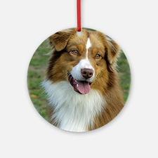 Australian Shepherd 9K5D-02 Ornament (Round)