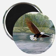 American Bald Eagle Flight Magnet