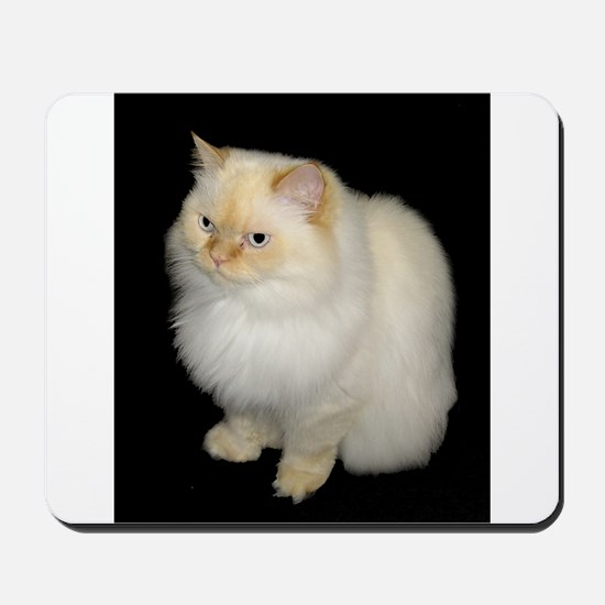 Zeus the White Himalayan Cat Mousepad