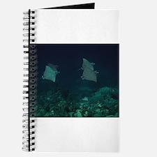 Cute Bonaire Journal