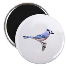 Blue Jay Posed Magnet