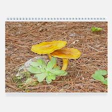 Fun Fungus Wall Calendar