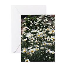 Wildflowers - Daisies Greeting Card