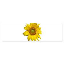 Sunflower Bumper Sticker (10 pk)