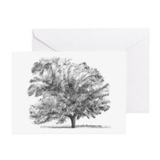 Pecan Tree Greeting Cards (Pk of 10)