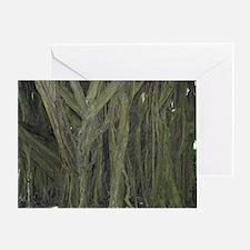 Old Banyan Tree Greeting Card