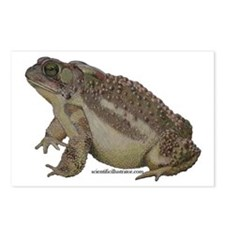 Toad Postcards (Package of 8)