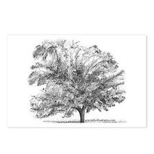 Cute Trees Postcards (Package of 8)