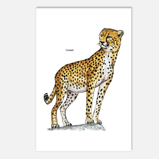 Cheetah Wild Cat Postcards (Package of 8)